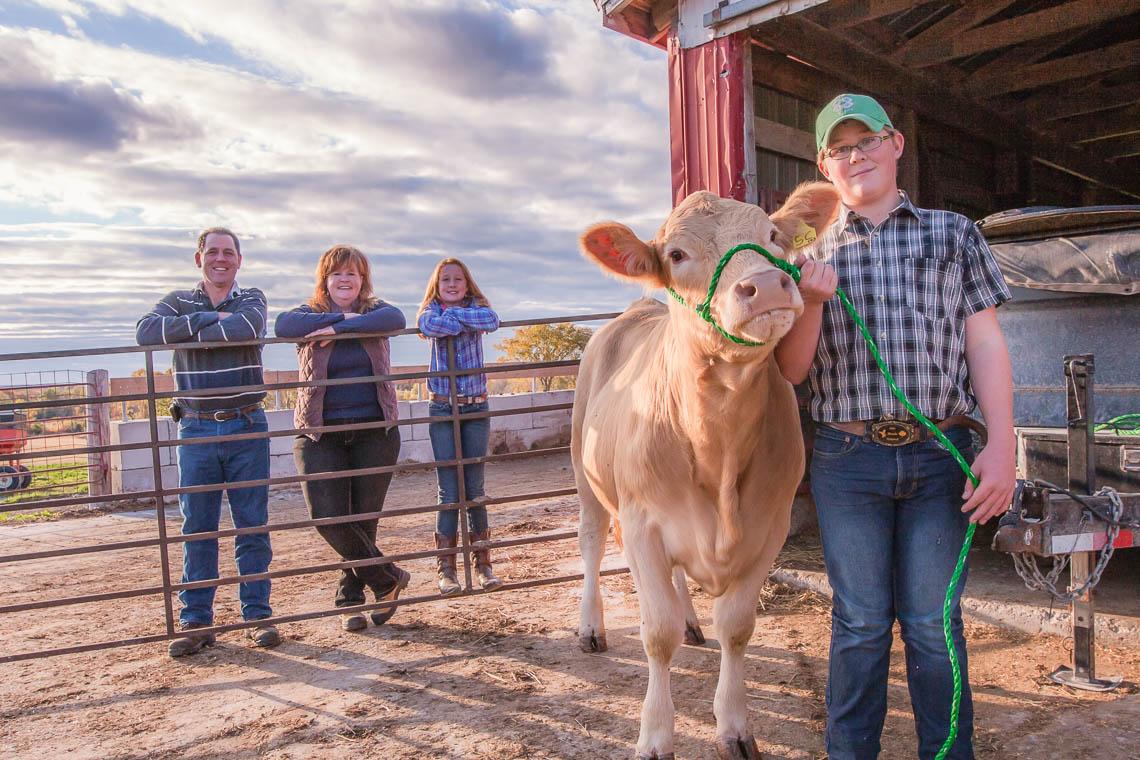 Dawson family cow on leash